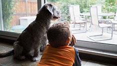 Dog and boy looking out window