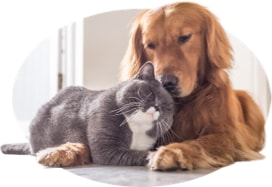 A cat cuddles with his canine roommate.