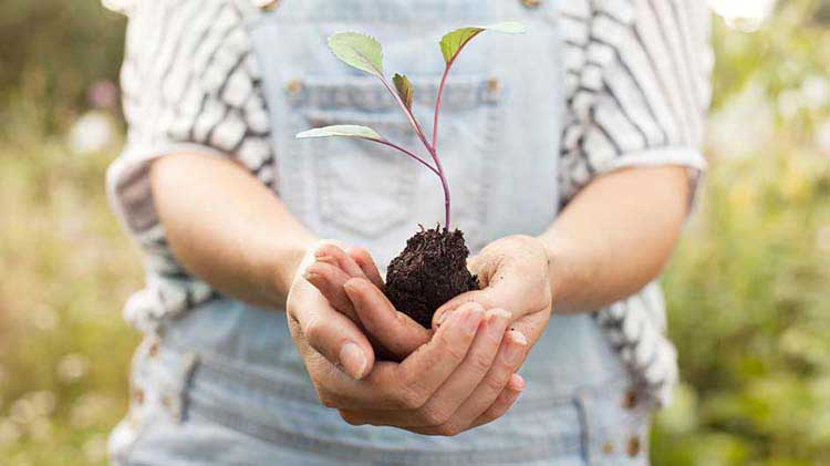 Person holding a tree seedling
