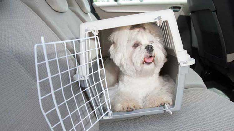 Small dog in a carrier in a car back seat