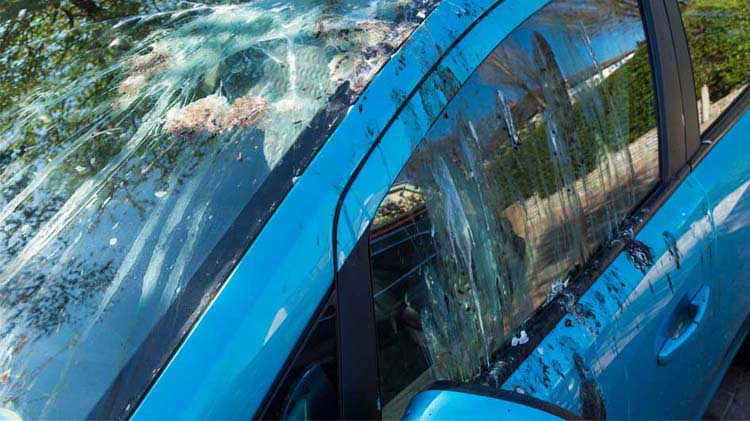 Blue car covered with bird droppings causing the owner to wonder how to keep the birds away from his house.