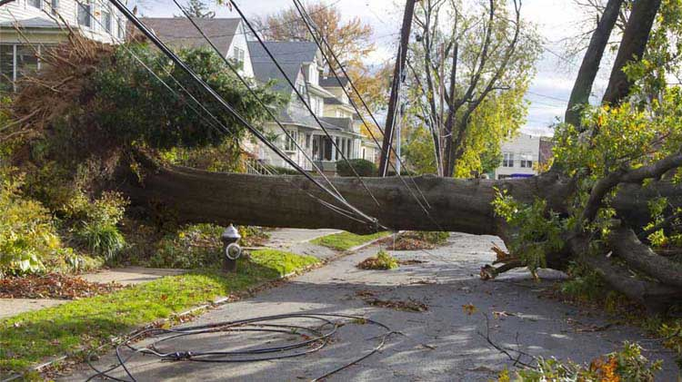Downed tree that took out power lines in a residential neighborhood