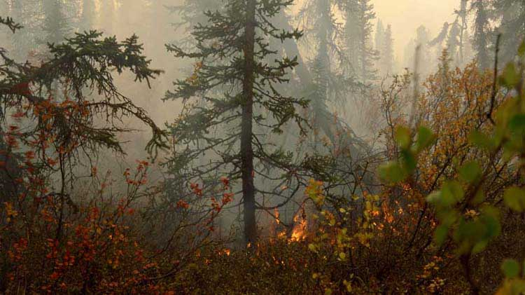 Wildfire guide: what to do before a wildfire