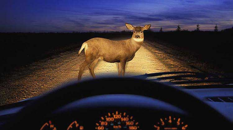 Where are Animal Collisions Most Likely?