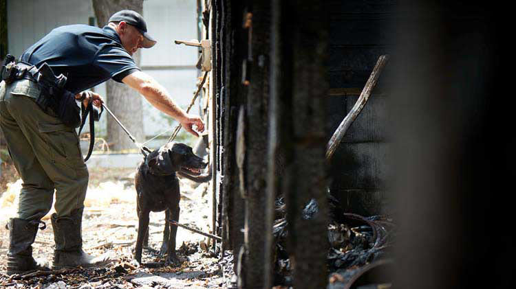Investigator walking through a burnt structure with an arson dog.