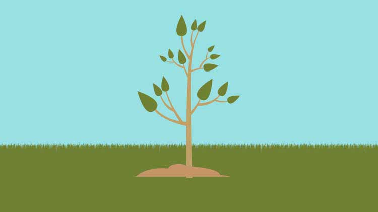 Ideas to Celebrate Earth Day and Arbor Day
