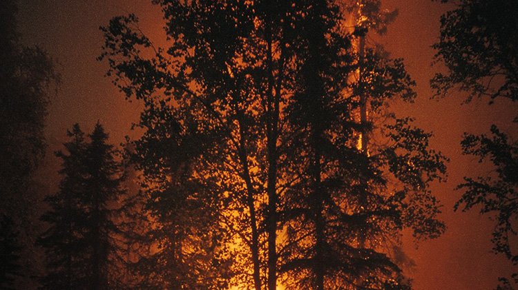 Tips for Surviving a Forest Fire