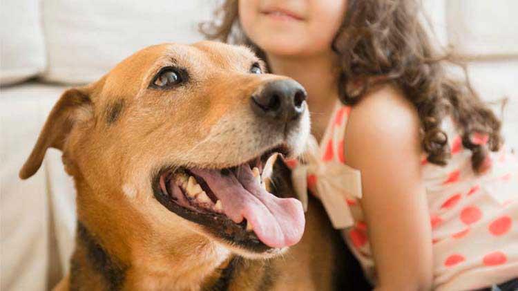 Liability insurance for dog bites