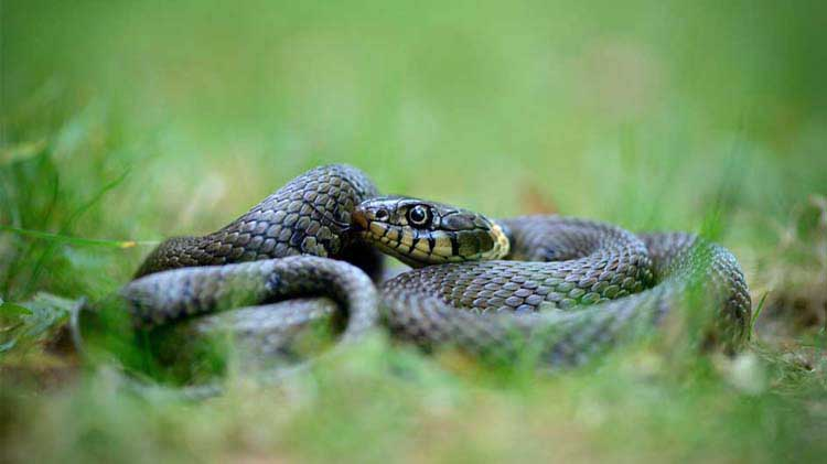 How to Spot Poisonous Snakes