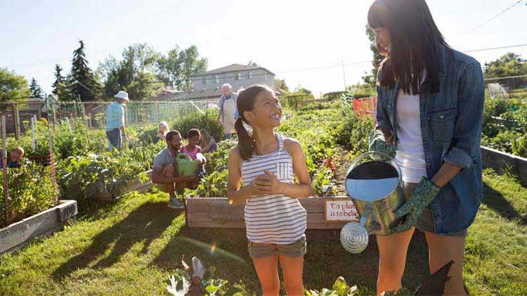 Ideas para jardines comunitarios y urbanos para propietarios de vivienda e inquilinos