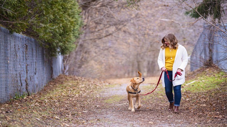 Woman walking her dog with a dog leash and harness