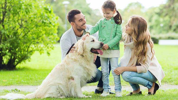Perros y niños: verdades sobre los riesgos de mordidas