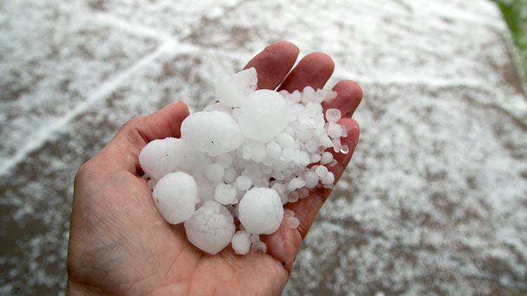 Various sizes of hail being held in a hand after a storm.